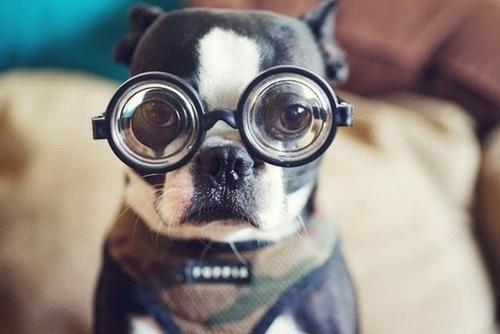 20-20-vision-dog